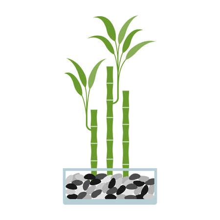 Lucky bamboo in glass pot. Vector illustration. Illusztráció