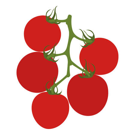 Tomatoes on branch. Isolated on white. Vector illustration.