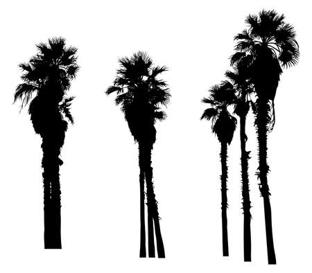 Silhouette of palm trees. Isolated on white. Vector illustration. 写真素材 - 124746926