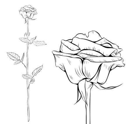 Rose line art silhouette. Single long stem rose flower. Vector illustration.
