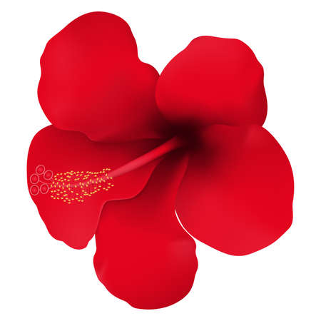 Red tropical flower. Hibiscus flower. Realistic vector illustration. Isolated on white.