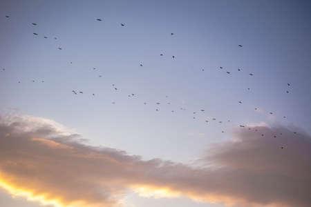 bandada de p�jaros: una bandada de aves