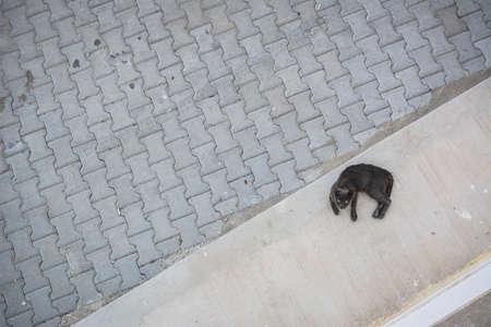 below: Cat below Stock Photo