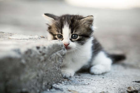 portrait of a small lone newborn frightened kitten on a concrete floor in the yard