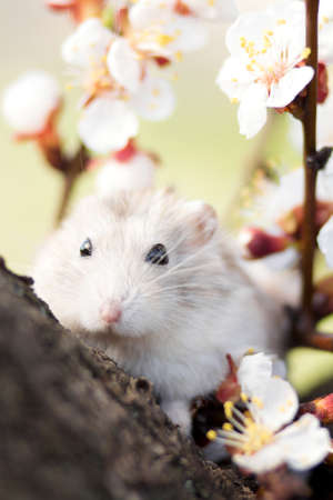 hamster on a tree among flowering branches
