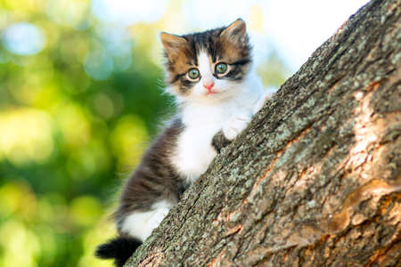 portrait of a cute little fluffy kitten climbing on a tree branch in a village in the nature Stok Fotoğraf