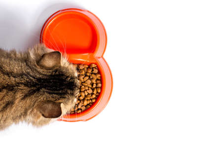 tabby cat eats food from a bowl on a white texture background
