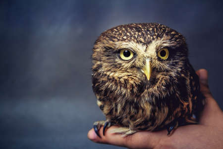 A portrait of a tamed owl's baby on the arm Stok Fotoğraf