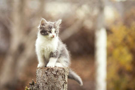 small kitten sitting on a stump Stok Fotoğraf