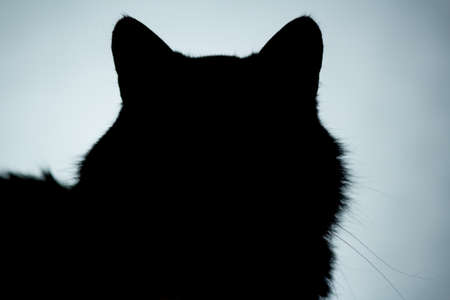 horizontal facial silhouette of head of fluffy cat with beautiful whiskers, dark blue background, icon Stok Fotoğraf