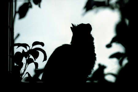 Kitten silhouette on sitting a windowsill through foliage, a night portrait of a lonely cat looking up Stok Fotoğraf