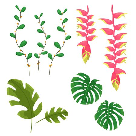 Beautiful jungle leaves and flowers. Vector elements of jungle plants for decoration and design concept for invitations, wedding cards, banners. Summer forest plants isolated vector elements, images. 向量圖像