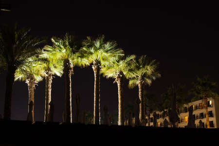 Group of palm trees at night lighted up nicely Stock Photo