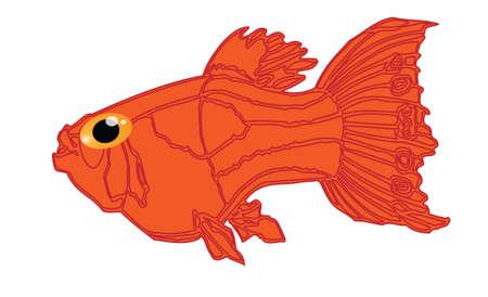 bloat: Funny orange fish cartoon