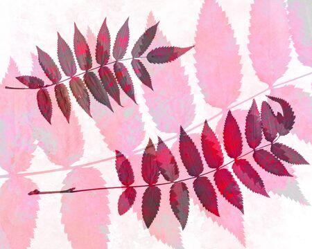 slur: Abstract watercolor background handmade rowan leaves.