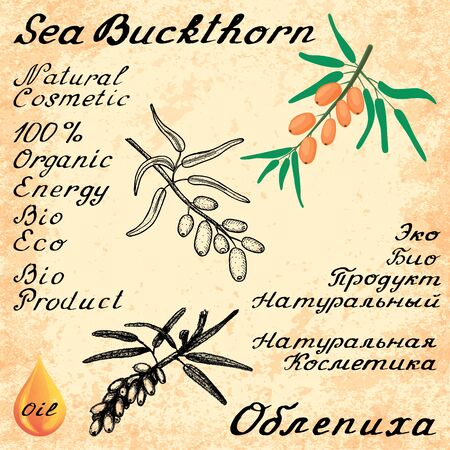 russian food: Sea buckthorn. set of lettering. In English and Russian texts. Eco Friendly. For labels,  online stores. Natural cosmetic. Bio products. Food, spices