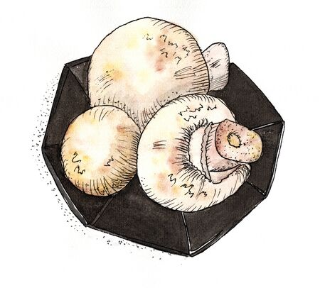 champignon: Mushrooms Champignon - watercolor drawing. 3 mushroom on a plate. On a white background