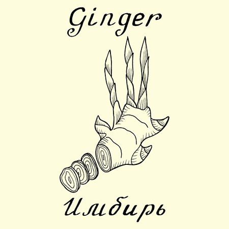 Ginger. ink drawing. In Englishand Russian texts. Eco Friendly. For labels, online stores. Natural cosmetic. Bio products. Food, spices
