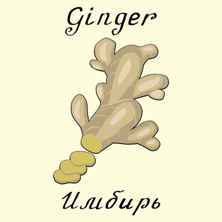 russian cuisine: Ginger. In English and Russian texts. Eco Friendly. For labels,  online stores. Natural cosmetic. Bio products. Food, spices