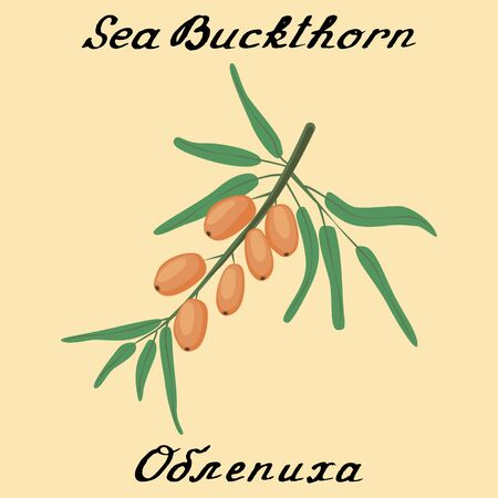 russian food: Sea buckthorn.In English and Russian texts. Eco Friendly. For labels,online stores. Natural cosmetic. Bio products. Food, spices