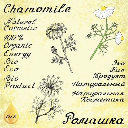 camomile tea: Chamomile . English and Russian texts. Eco Friendly. For labels, online stores. Natural cosmetic. Bio products. Botanical sketch