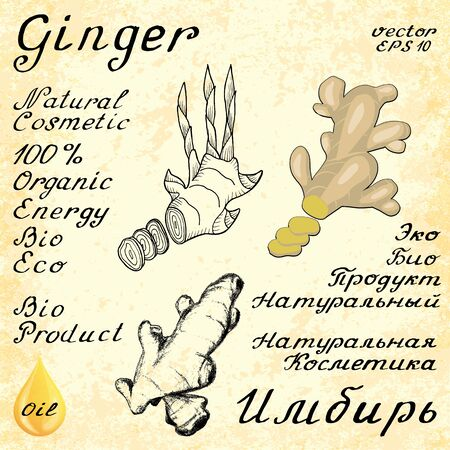 russian food: Ginger. In English and Russian texts. Eco Friendly. For labels,  online stores. Natural cosmetic. Bio products. Food, spices