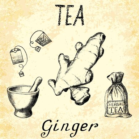 Ginger herbal tea. Set of  elements on the basis hand pencil drawings. Ginger root, tea bag, mortar and pestle, textile bag. For labeling, packaging, printed products Illustration