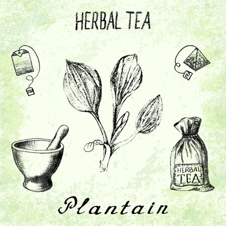plantain: Plantain herbal tea. Set of elements on the basis hand pencil drawings. Herb Plantain, tea bag, mortar and pestle, textile bag. For labeling, packaging, printed products
