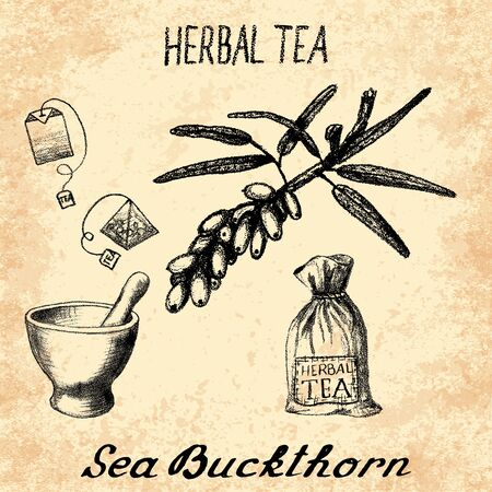 origanum: Sea buckthorn herbal tea. Set of elements on the basis hand pencil drawings. Sea buckthorn, tea bag, mortar and pestle, textile bag. For labeling, packaging, printed products Illustration