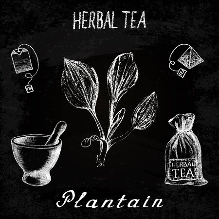 Plantain herbal tea. Chalk board set of elements on the basis hand pencil drawings. Herb Plantain, tea bag, mortar and pestle, textile bag. For labeling, packaging, printed products