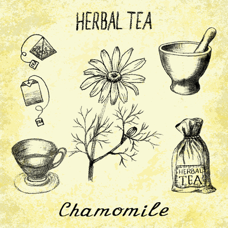 Chamomile herbal tea. Set of elements on the basis hand pencil drawings. Herb chamomile, tea bag, mortar and pestle, textile bag, cup. For labeling, packaging, printed products Illustration