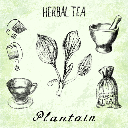 Plantain herbal tea. Set of elements on the basis hand pencil drawings. Herb Plantain, tea bag, mortar and pestle, textile bag, cup. For labeling, packaging, printed products
