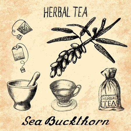 origanum: Sea buckthorn herbal tea. Set of elements on the basis hand pencil drawings. Sea buckthorn, tea bag, mortar and pestle, textile bag, cup. For labeling, packaging, printed products Illustration