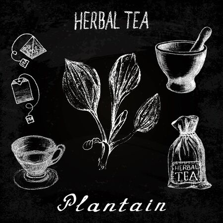 Plantain herbal tea. Chalk board set of elements on the basis hand pencil drawings. Herb Plantain, tea bag, mortar and pestle, textile bag, cup. For labeling, packaging, printed products