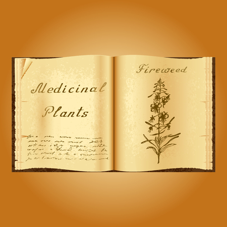 herbalist: Fireweed. Botanical illustration. Medical plants. Old open book herbalist. Grunge background. Vector illustration