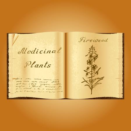 herbalist: Fireweed. Ejemplo bot�nico. plantas medicinales. Viejo herbolario libro abierto. fondo del grunge. ilustraci�n vectorial