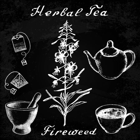 angustifolium: Willow herb, Chamerion, fireweed hand drawn sketch botanical illustration. Lettering. Herbal tea elements - cup, teapot, kettle, tea bag, bag, mortar and pestle. Effect chalk board