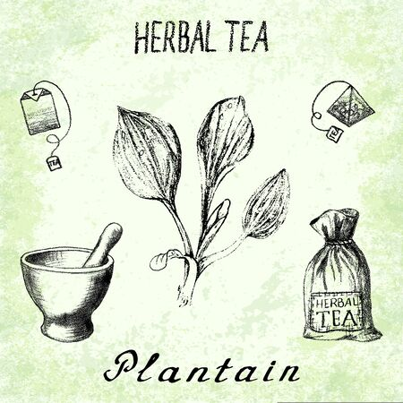 plantain: Plantain herbal tea. Set on the basis hand pencil drawings. Herb Plantain, tea bag, mortar and pestle, textile bag. For labeling, packaging, printed products