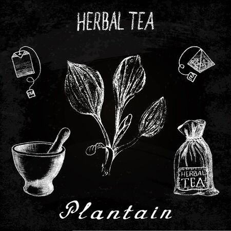plantain: Plantain herbal tea. Chalk board set on the basis hand pencil drawings. Herb Plantain, tea bag, mortar and pestle, textile bag. For labeling, packaging, printed products