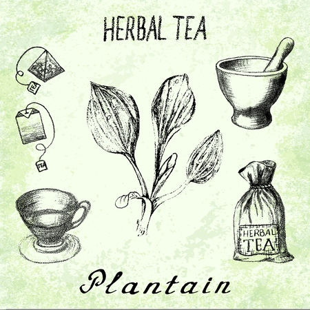 plantain: Plantain herbal tea. On the basis hand pencil drawings. Herb Plantain, tea bag, mortar and pestle, textile bag, cup. For labeling, packaging, printed products