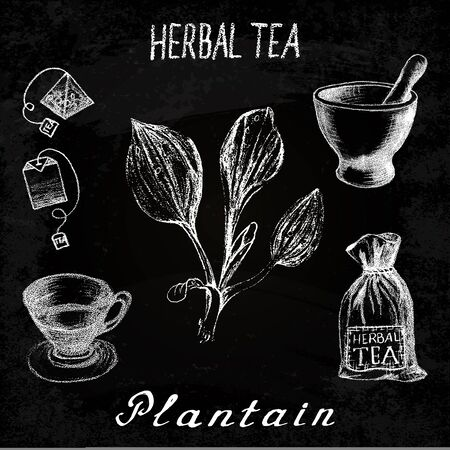 plantain: Plantain herbal tea. Chalk board set on the basis hand pencil drawings. Herb Plantain, tea bag, mortar and pestle, textile bag, cup. For labeling, packaging, printed products Stock Photo