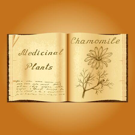 herbalist: Manzanilla. Ejemplo bot�nico. plantas medicinales. Viejo herbolario libro abierto. fondo del grunge. ilustraci�n vectorial Foto de archivo