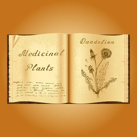 herbalist: Dandelion. Botanical illustration. Medical plants. Old open book herbalist. Grunge background. Vector illustration Stock Photo
