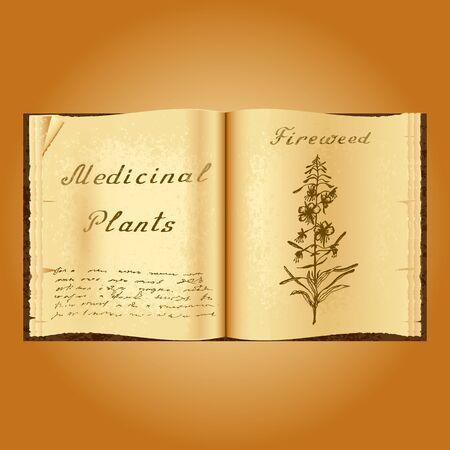 herbolaria: Fireweed. Ejemplo botánico. plantas medicinales. Viejo herbolario libro abierto. fondo del grunge. ilustración vectorial