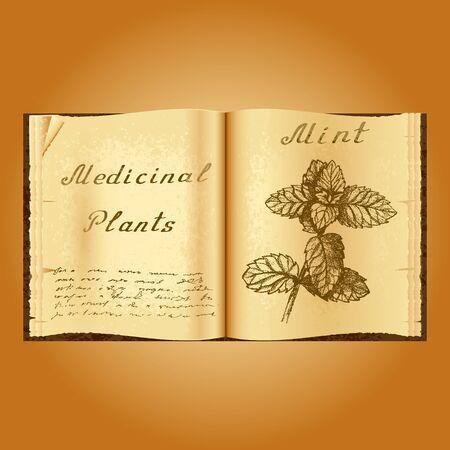 herbalist: Mint. Botanical illustration. Medical plants. Old open book herbalist. Grunge background. Vector illustration