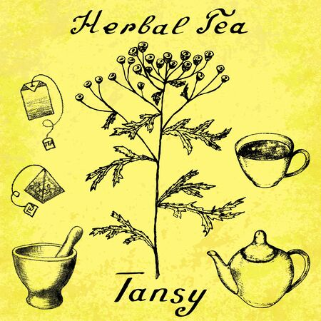medical herbs: Tansy hand drawn sketch botanical illustration. Vector drawing. Herbal tea elements - cup, teapot, kettle, tea bag, bag, mortar and pestle. Medical herbs. Lettering in English. Grunge background