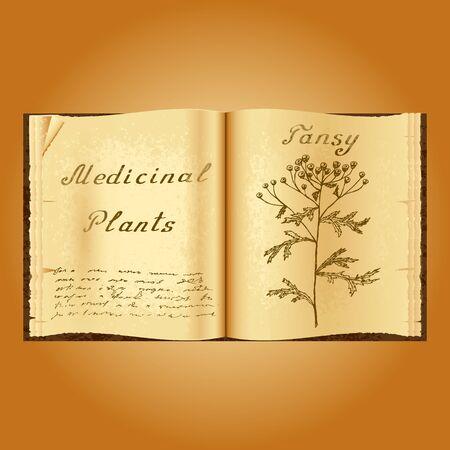 herbolaria: Tansy. Ejemplo botánico. plantas medicinales. Viejo herbolario libro abierto. fondo del grunge. ilustración vectorial Vectores
