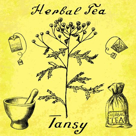 medical herbs: Tansy hand drawn sketch botanical illustration. Vector drawing. Herbal tea elements - tea bag, bag, mortar and pestle. Medical herbs. Lettering in English languages. Grunge background