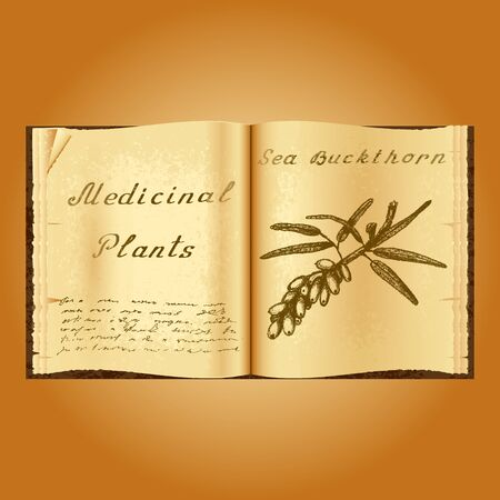herbolaria: espino amarillo. Ejemplo botánico. plantas medicinales. Viejo herbolario libro abierto. fondo del grunge. ilustración vectorial Vectores