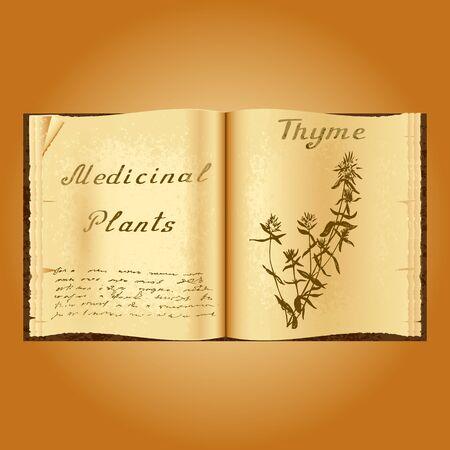 herbolaria: Tomillo. Ejemplo botánico. plantas medicinales. Viejo herbolario libro abierto. fondo del grunge. ilustración vectorial Vectores